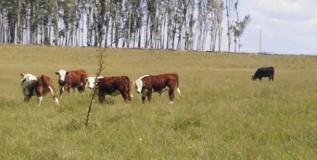 PROTESTA RURAL Y LIMITES DEL DESARROLLO AGROPECUARIO