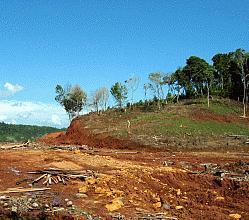 faodeforestacion2