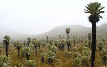POSTEXTRACTIVISMOS EN COLOMBIA: ENTRE LA VIOLENCIA Y LA PAZ