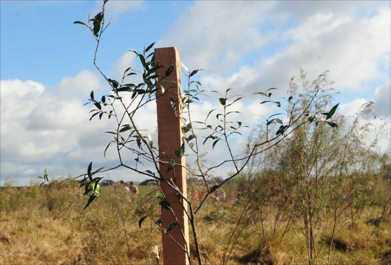 PROPUESTAS AMBIENTALES: PROGRESISMO O ¿REGRESISMO? EN URUGUAY